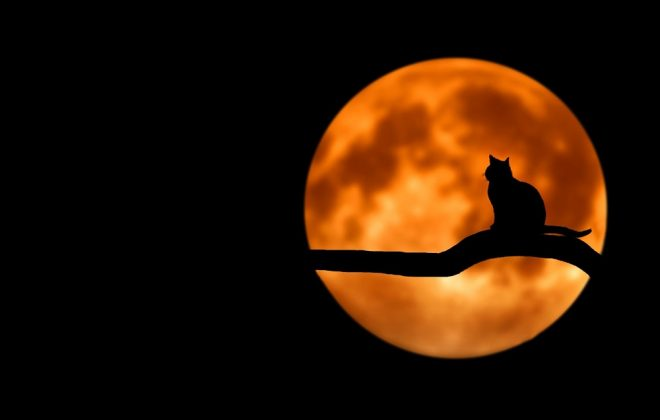 cat silhouette against full moon spooky reading recs blog header