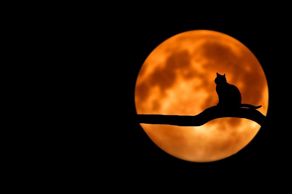 cat silhouette against full moon spooky reading recs blog header